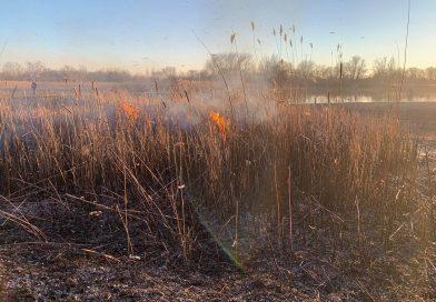 2021. március 3. Dömsöd – Kiskunlacháza között, Préri tó mögött – nádas füstöl